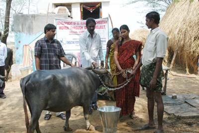 Sustainable Development through Dairy Products for 50 Women from Rural Villages